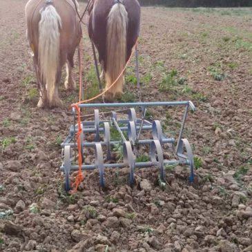 Attelage agricole en paire